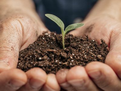 close-up-of-male-hands-holding-soil-and-little-plant